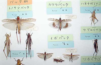 Insects collected by Mr. Hiroshi Aoki